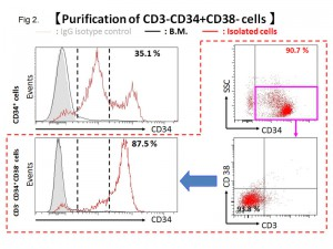 Purification of CD3-CD34+CD38- cells by magnetic beads from rhesus bone marrow.